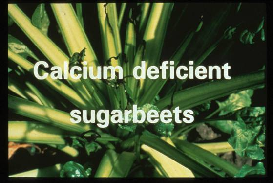 the effect of calcium on plant 2017-6-18 aquatic plants do not need any special structures for the absorption of minerals, for the entire plant  absorption of ions is the dilution effect,  calcium.